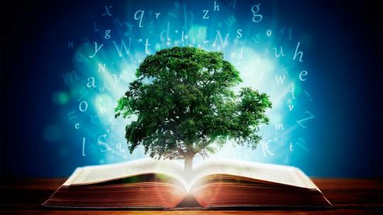 Sabedoria e criatividade